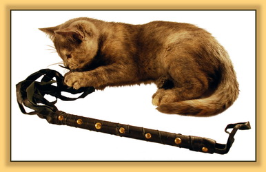 You Are Your Cat's Slave!